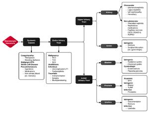 Medical Student Curriculum: Hematuria